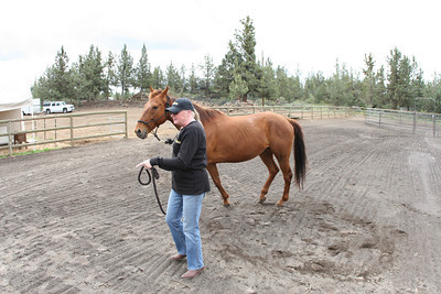 joan steelhammer, equine outreach horse rescue