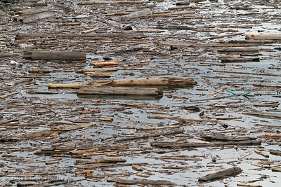 Driftwood finds its place nuzzled up against the Oroville Dam April 14, 2016 in Oroville, Ca. Recent rains have brought the lake level up significantly. (Emily Bertolino -- Enterprise-Record)