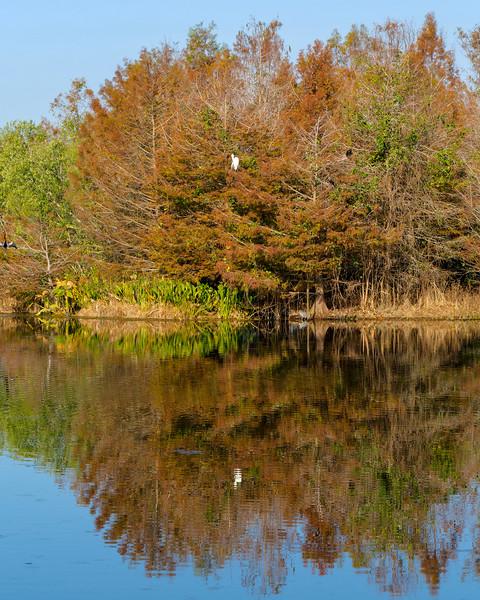 Egret in Cedars Reflection