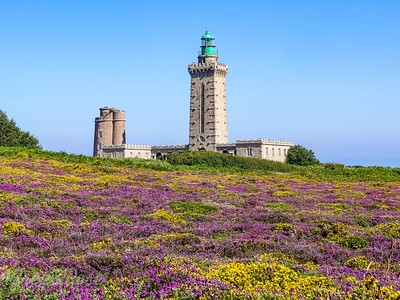 Cap Frehel Lighthouse and the Heather