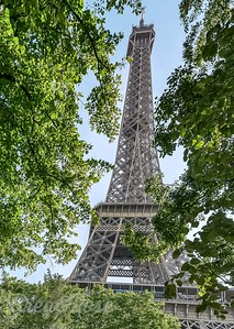The Eiffel Tower through the trees