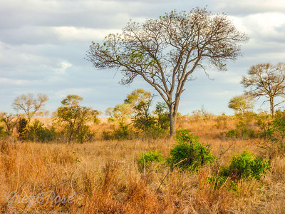 Sparse African Lanscape