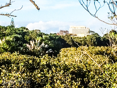 Mangroves and Toi Toi in the hart of our urban neighbourhood