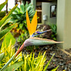 Strelitzia reginae and water drops