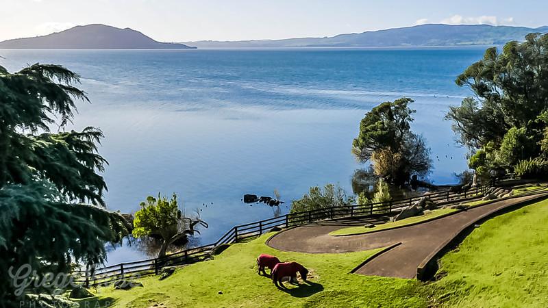 Milo and Danny Boy and Lake Rotorua