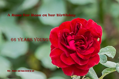 A Tribute to my special lady Rose
