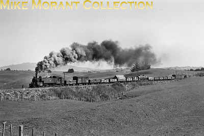 New Zealand Government Railways Wab class 4-6-4T no. 767 between Putararu and Litchfield on the Kinleath branch on 3/9/56. [Derek Cross / Mike Morant collection}