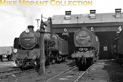 Hither Green shed host two og its own allocation in the form of Maunsell N1 mogul no. 31880 and Bulleid Q1 0-6-0 no. 33014. Both locos were at Hither Green from 1951 until 1959. [Mike Morant collection]