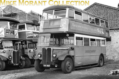 London Transport 'Leaning-back' STL 307, registration no. AUC 567, at what is probably Putney Bridge garage in 1949. Also in shot are outside staircase LT 40 and Bluebird LT 1391 both of which were used on Epsom race specials in June 1949 as shown on the indicator blind of LT 40. STL 307 was withdrawn in October 1949, LT 40 in January 1950 and LT 1391 in May 1949. It's worth noting that many of the buses used for those race specials were already wearing the dreaded condemned symbol. [Mike Morant collection]