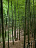Bamboo Forest, Hangzhou