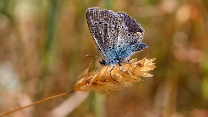 A worn Blue