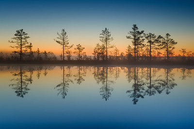 TALES FROM THE BOG - REFLECTION