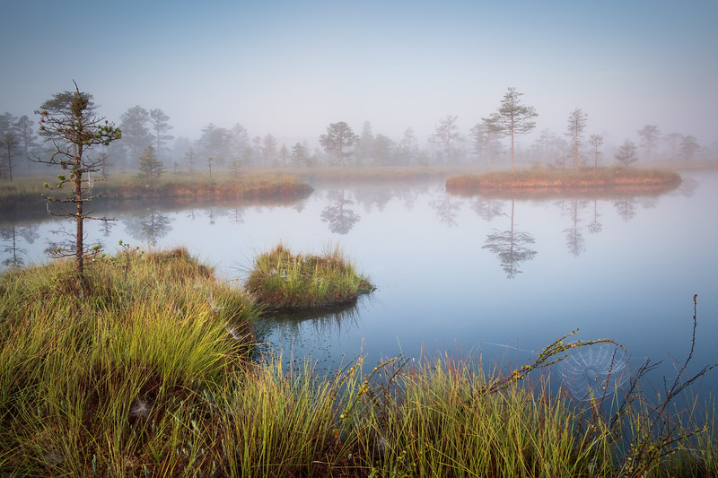 TALES FROM THE BOG I