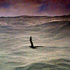 Albatross AND BIG  WAVES