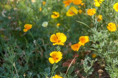 20140719-110459-Botanical-Gardens