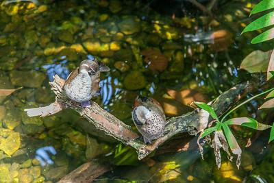 20140719-112632-Botanical-Gardens