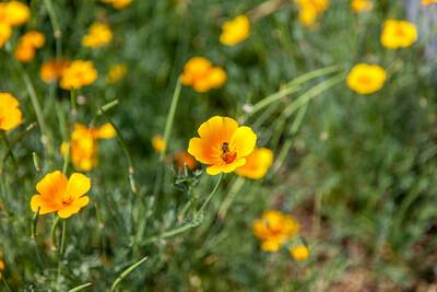 20140719-110445-Botanical-Gardens