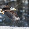 ald Eagle