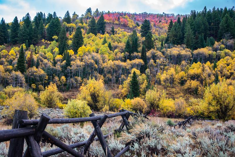 foliage Northern Utah