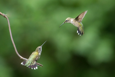 Two RT Hummingbirds