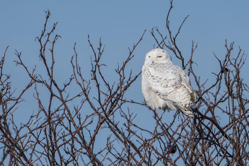 3 Owl day - tree