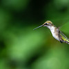 Blurred wings