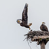 Two eagles on platform
