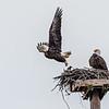 Two eagles on platform