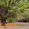 Hagley Park Christchurch, NZ