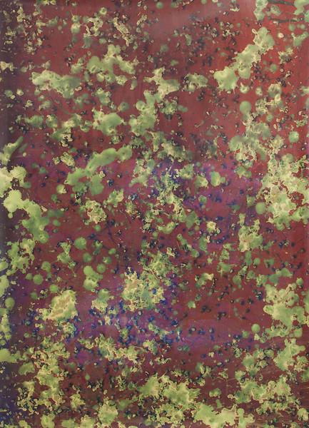 Fringetree Berries