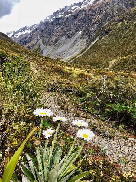 Alpine flora, Otira Valley track