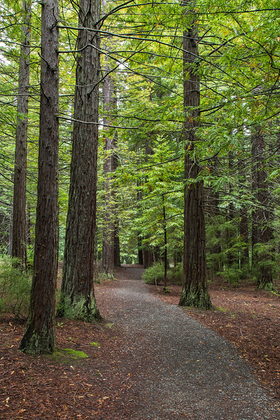 Redwood Forest walk - Hanmer Springs
