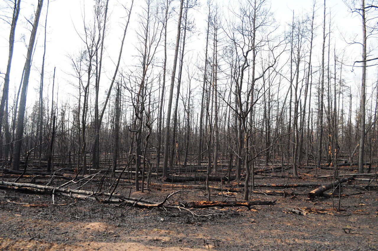 I am not sure if these trees fell because of the fire or if they were just there before.