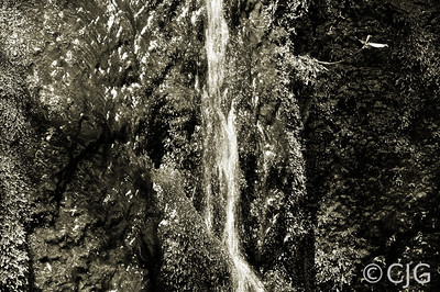 Small Water Fall (Black & White)