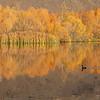 Autumn reflections, Twizel