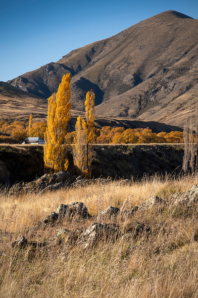Autumn at Molesworth Station