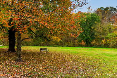 Fall Bench In Cherokee Park