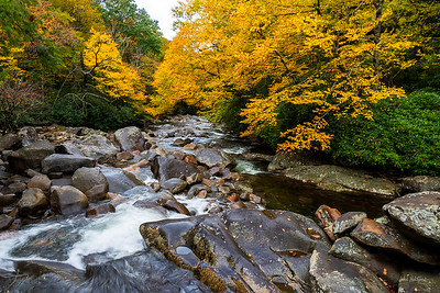 West Prong of the Little Pigeon River Fall Color along Chimney Tops Trail