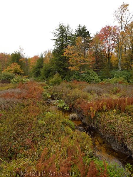 Autumn colors in Olson Bog<br /> Tucker County, WV<br /> October 2014