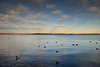 Ducks on the Choptank River, smokey rays in the distance<br /> Cambridge, Dorchester County, MD<br /> December 2013