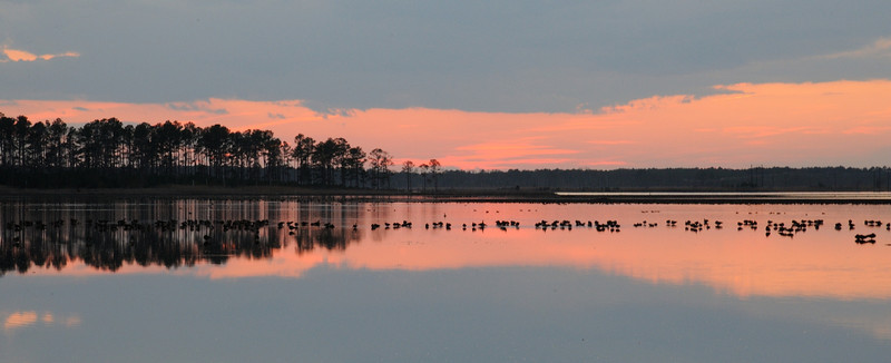 Sunset with Canada Geese along the Wildlife Drive<br /> <br /> Blackwater NWR<br /> Dorchester County, Maryland<br /> <br /> January 2012