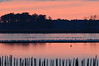 Sunset, geese & gulls<br /> Blackwater NWR, Maryland<br /> <br /> December 2011