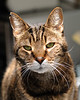 Mr. Stripey and his Magnificent Whiskers<br /> May 2011