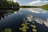 Lily pads<br /> Pocono Lake Preserve, PA<br /> August 2014