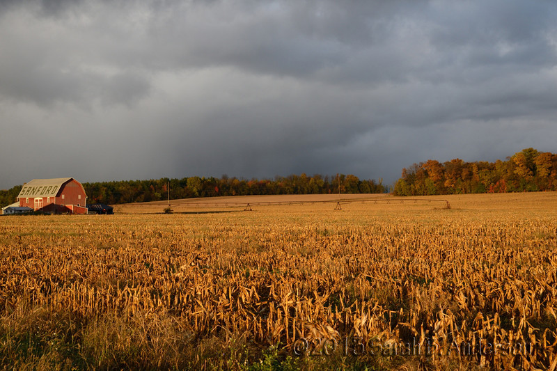 Autum storm and fall colors<br /> Sanford, MI<br /> October 2013