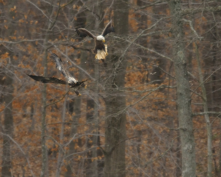 Hey, where's that fish going?<br /> <br /> Fairfax County, Virginia<br /> January 2012
