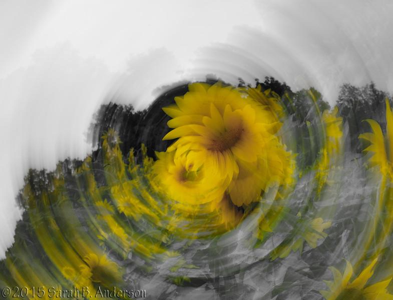 Sunflower swirl, desaturated