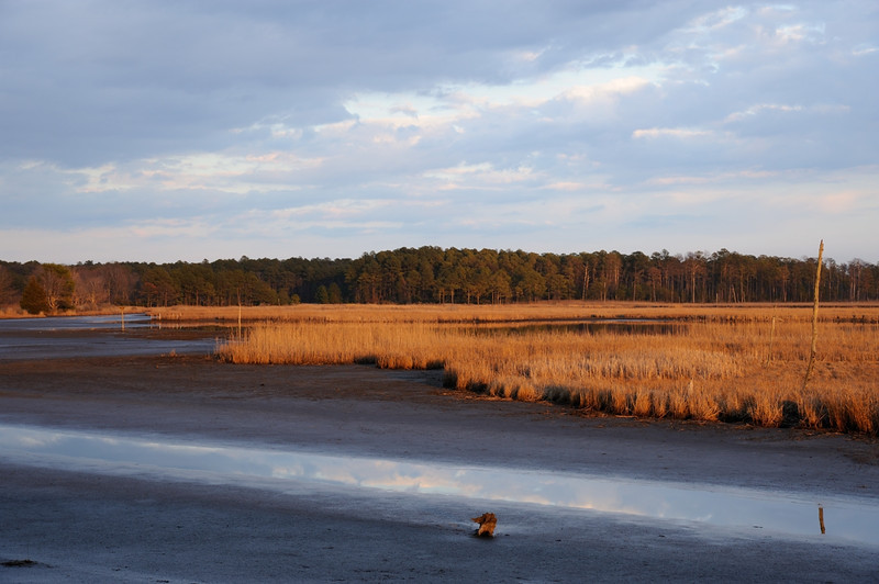 late afternoon along the Wildlife Drive<br /> <br /> Blackwater NWR<br /> Dorchester County, Maryland<br /> <br /> January 2012