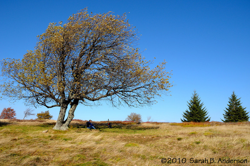 JC under the tree<br /> Dolly Sods Wilderness, West Virginia<br /> <br /> October 2010<br /> Nikon D300, Nikon 18-200 vr