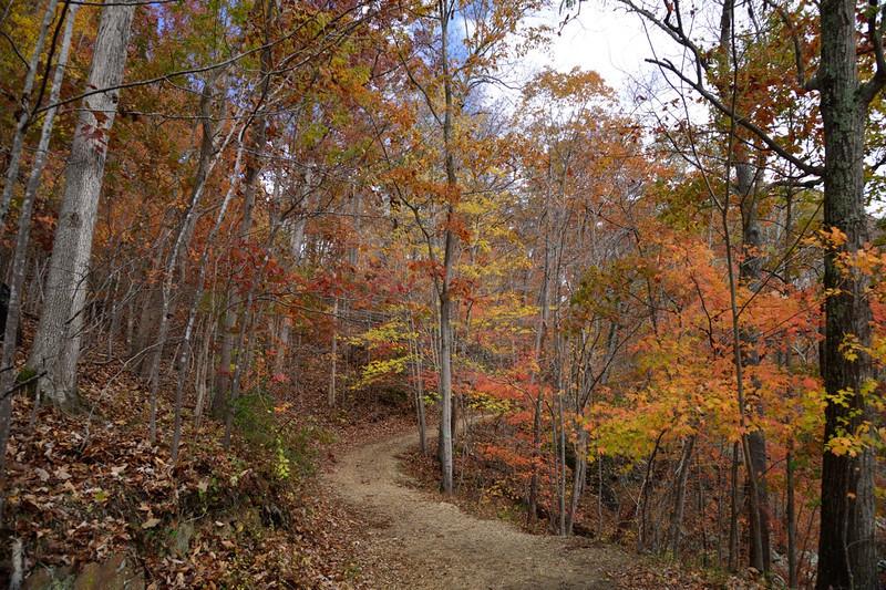 Difficult Run Trail